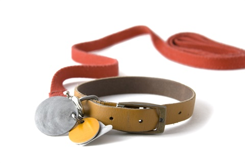 A dog collar and leash